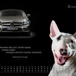 2010-10-22_kalendarz_2011_osobowe_prefka_cls