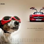 2010-10-22_kalendarz_2011_osobowe_prefka_sls